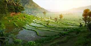 Land at Bali